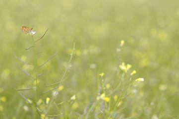 Flores y mariposa en primavera