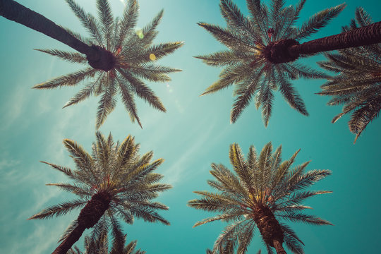 Vintage Beverly Hills, Hollywood captivating Palm Trees overhead shot