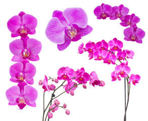 flowers of orchid frame