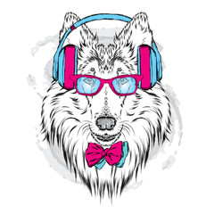 Foto op Canvas Hand getrokken schets van dieren Pedigree dogs painted by hand. Collie wearing headphones and sunglasses. Vector illustration.