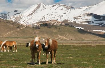 Fattoria con cavalli