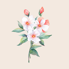 Bouquet of white flowers. Watercolor in vector