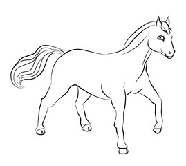 black and white image of a horse