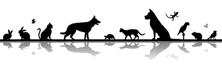 Obraz Silhouette Haustiere - Hund, Katze, Vogel u.a. - fototapety do salonu