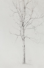 pencil drawing birch on old paper background.