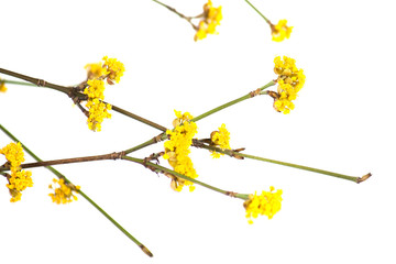 Yellow spring branch