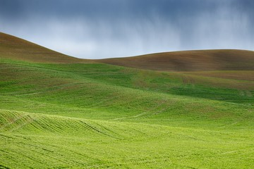 Growing wheat at the rolling hills farmland and rain. Palouse Hills in Washington, United State of America.