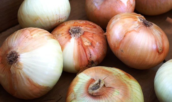 Fresh sweet Maui onions