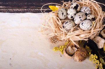Quail nest with spotted eggs, dried plants and vintage paper on a wooden  background. Free space for your text.