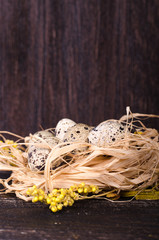 Quail nest with spotted eggs, dried plants on a wooden  background. Free space for your text.