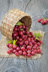 Gooseberries in wicker basket