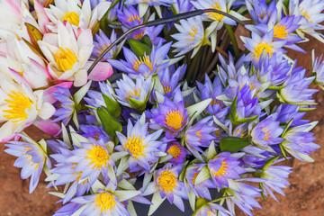 lotus flower background decoration