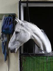 racehorse portraits, animals