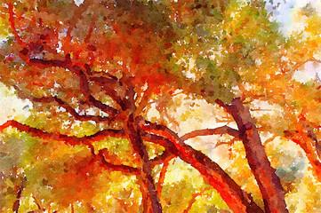 Carmel Valley trees,California