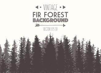 Fir forest background drawn vector illustration
