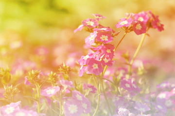 Closeup to Art of Colorful Flowers blowing in the wind motion bl