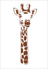 Giraffe on white background isolated