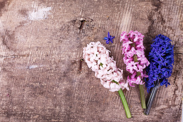 Background with fresh pink hyacinths on vintage  wooden planks.