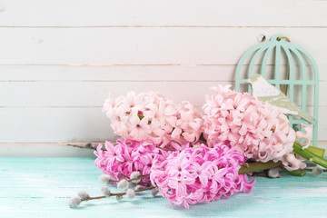 Background with fresh pink hyacinths and willow  on turquoise  p