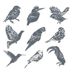 Ink hand drawn bird set