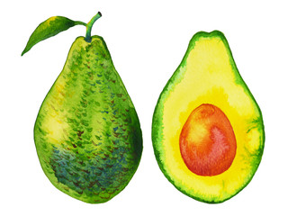avocado, art hand painted, watercolor painting, illustration