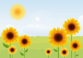 Summer landscape with sunflowers. Sunflower vector. Vector illustration of a sunny day