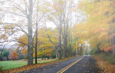 Autumn / fall foliage along a foggy country road