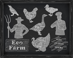 beautiful scheme cutting chicken turkey duck goose quail and far