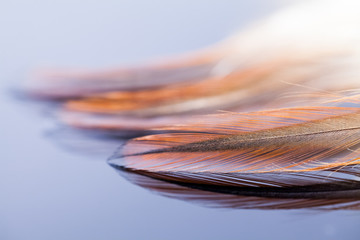 Abstract composition with rooster feather