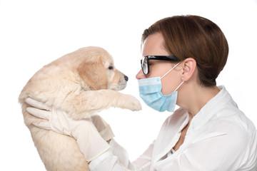 Veterinarian Examine Cute Golden retriever Puppy