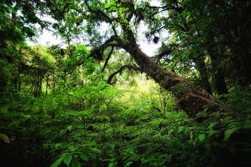 Rain forest in Chiang mai Thailand