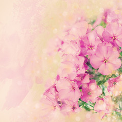 Nature Background. Flowers Background. Pink Background