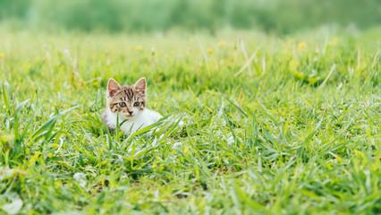 Kitten sitting on summer field