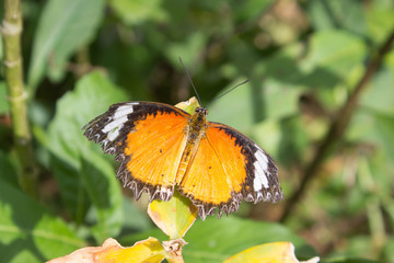 Butterfly in outdoor garden