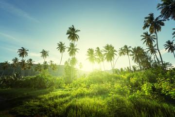 Fototapete - sunset in jungle, seychelles