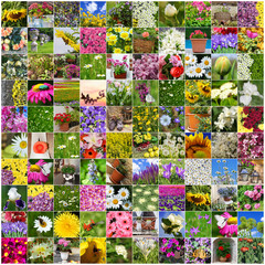 collage of flowers blooming