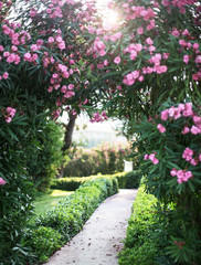 Natural blooming arch over the path in the garden.