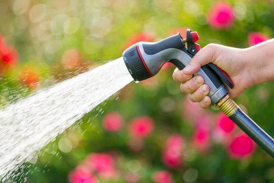 Watering garden flowers using hose