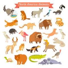 North America animals  vector illustration. Big vector set. Isolated on white background. Preschool, baby, continents, travelling, drawn