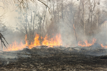 wildfire is burning dry grass