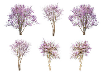 set of pink flowers trees isolated on white background