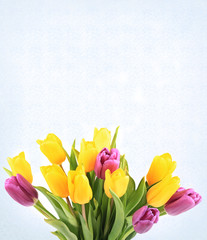 bouquet of tulips isolated on white background selective soft focus toned photo