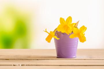 Daffodils in a purple bucket
