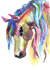 Horse head. Color watercolor illustration. Hand drawn