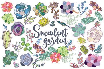 Set of floral succulent elements for your compositions
