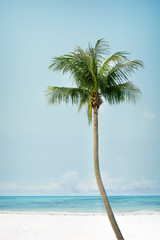 Fototapete - Vintage palm tree on the tropical beach (seaside) - summer season