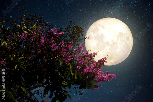Wall mural Beautiful cherry blossom (sakura flowers) with Milky Way star in night skies; full moon - Retro style artwork with vintage color tone(Elements of this moon image furnished by NASA)