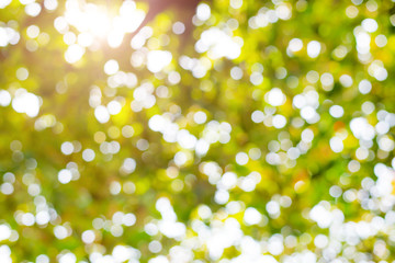 Abstract nature bokeh background with sunlight