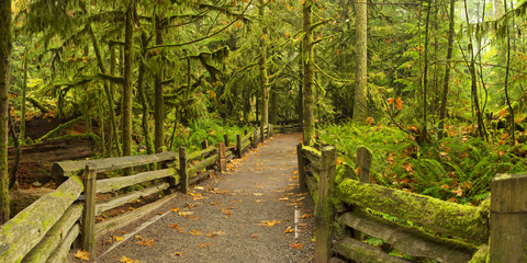Path through lush rainforest, Cathedral Grove, Vancouver Island