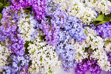 Lilac Flower Background, Blooms Flowers, Colorful Spring Pattern